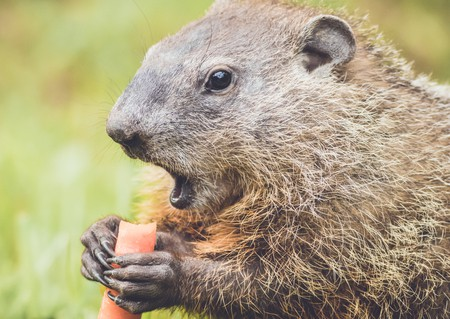 Groundhog day for old blogs? Nothing wrong with reusing good content!